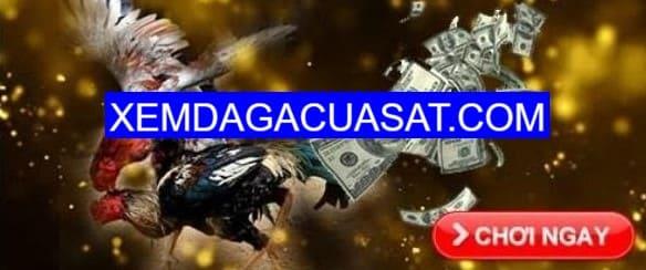 daga68